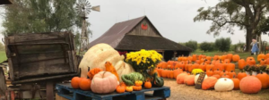 Weston Red Barn Farm in Weston, Missouri, is a fall favorite for the Kansas City area.
