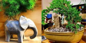 Monday Morning Coffee with St. Joseph plant lovers' paradise — Unique Unicorn.
