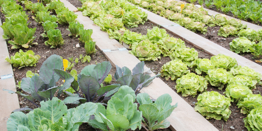 Once your garden is all planned and planted, it still requires ongoing maintenance.